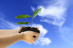 New life. Hands holding a new plant against blue sky royalty free stock photography