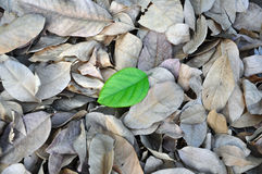New life. Cool detail of leaves for the concept of new life royalty free stock images