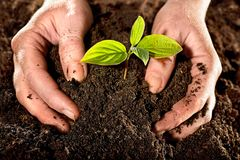 New life. Farmer hands holding a fresh young plant. New life and environmental conservation concept stock photo