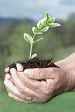 New life. Senior hands holding small plant royalty free stock images