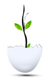 New life. Young plant growth from egg Stock Photo