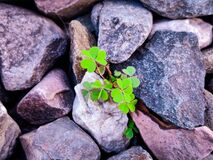 Free New Life Stock Photography - 191744012