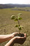 New life. Cupped hands holding seedling. Symbolizing new life stock photo