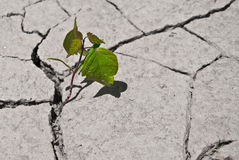 New life. Young plant growing on desert land Royalty Free Stock Photography