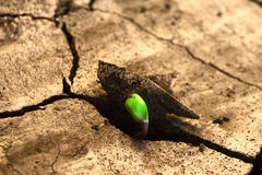 New life. Concept new life. Rising sprout on dry ground stock photo