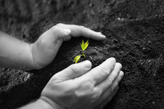 New life. Image of male hands transplanting young plant stock photography