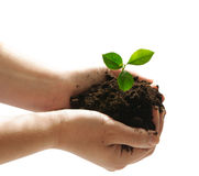 New life. Hands holding green plant isolated stock photography