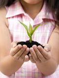 New Life. A young girl holds a small seedling that is ready to be planted. Replenishing our environment stock image