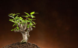 New life. New leave to show reborn Royalty Free Stock Photos