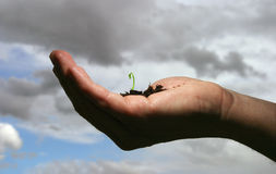New life. Hand with soil and seedling royalty free stock photography