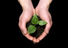 New life. Hands holding sapling in soil stock photography