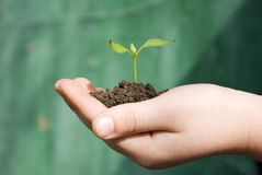 New life. Hands holding sapling in soil royalty free stock photography