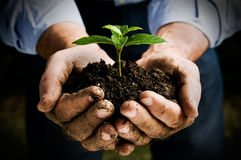New life. Farmer hand holding a fresh young plant. Symbol of new life and environmental conservation Stock Photos