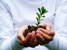 New life. Seedling in young woman hands stock photography