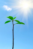 New life. Plant,blue sky and sun stock image