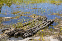 New Life on an Abandoned Raft in Shallow Reed Pond Royalty Free Stock Photos