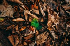 New life amongst death leaves stock images
