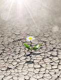 New life in arid land. Small dandelion: new life in arid land Stock Image