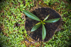 NEW LIFE IS BEGIN. New development and renewal as a business concept. Tittle tree on stump Stock Images