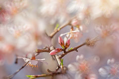 New life - budding buds Royalty Free Stock Images
