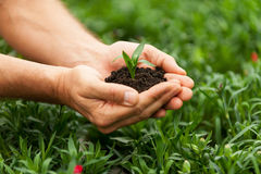 New Life. Close-up of male hands holding green plant royalty free stock photography