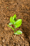 New life concept. Green seedling growing out of soil royalty free stock images