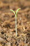 New life concept. Green seedling growing out of soil stock photo