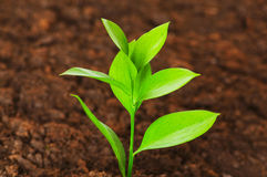 New life concept. Green seedling growing out of soil royalty free stock photo