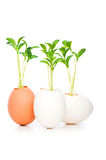 New life concept Stock Photo