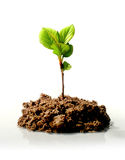 New life concept. Small plant. New life concept royalty free stock photo