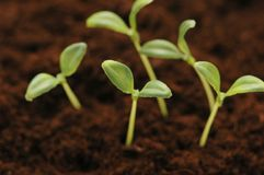 New life concept. Seedlings growing in the soil Stock Photos