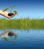 New life concept. Plant in hand. New life concept royalty free stock images