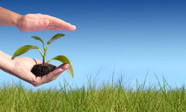 New life concept. Plant in hand. New life concept Royalty Free Stock Photography