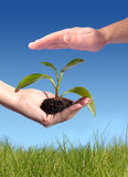 New life concept. Plant in hand. New life concept stock photography