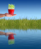 New life concept. Plant in hand. New life concept Royalty Free Stock Image
