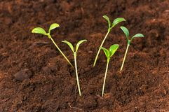 New life concept. Green seedlings growing out of soil Stock Images