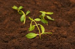 New life concept. Green seedling growing out of soil Stock Photography