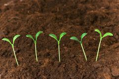 New life concept. Green seedlings growing out of soil Stock Photography