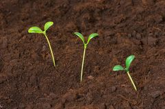 New life concept. Green seedlings growing out of soil Stock Photos