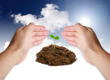 New life concept. Hands protect little plant royalty free stock photography