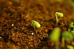 New life concept Royalty Free Stock Photo