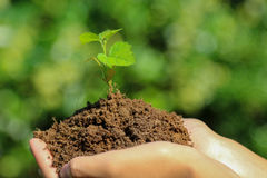 New life concept hands holding seedling Stock Images