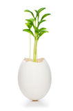 New life concept with seedling and egg Royalty Free Stock Images