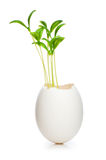 New life concept with seedling and egg Stock Photography