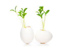 New life concept with seedling and egg Royalty Free Stock Photography