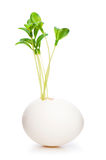 New life concept with seedling and eggs on white Stock Photos