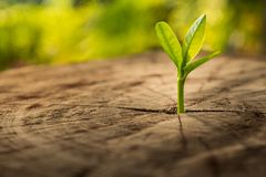 New Life concept with seedling growing sprout tree. Royalty Free Stock Image