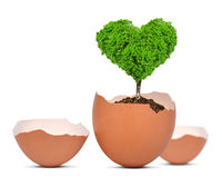 New life concept. Tree in the shape of heart growing out of the egg isolated on white.New life concept Stock Photography