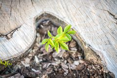 Free New Life Concept With Seedling Growing Sprout On The Stump Royalty Free Stock Images - 153570039
