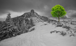 New life. Conceptual photo of green tree in winter mountain landscape, new life idea royalty free stock photography